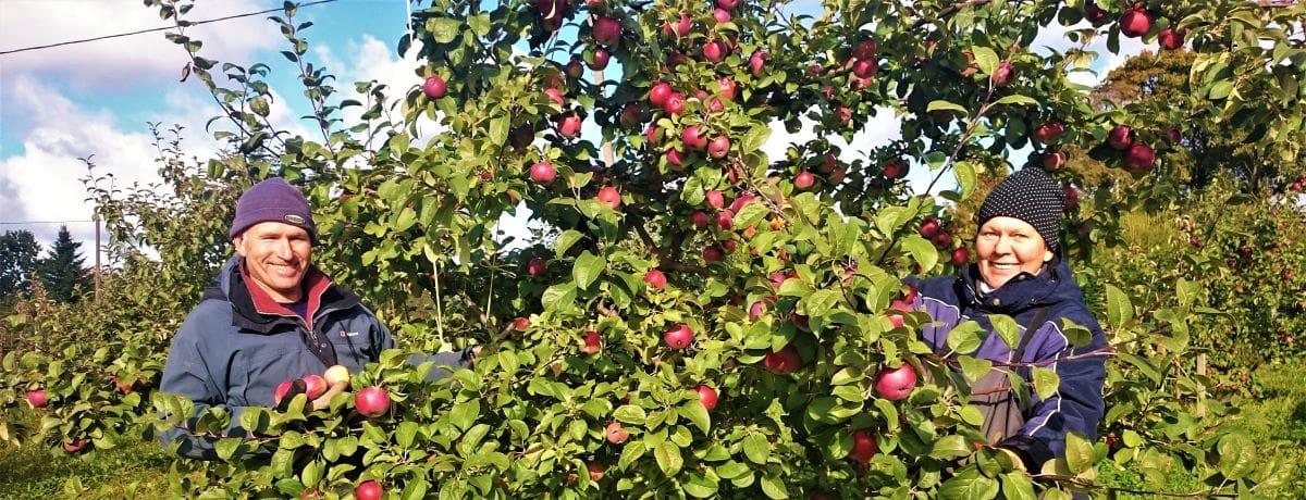 Rebase talu õunad