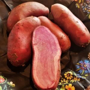 punane kartul Red Cardinal