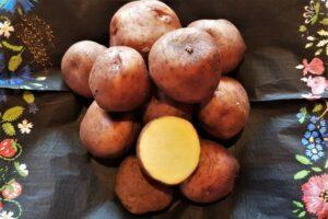 Eesti kartul `Väike verev`