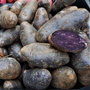 Tumelilla kartul Violet Queen