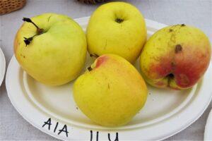 Õunasordid Aia ilu