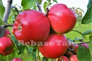 Õun Alesja