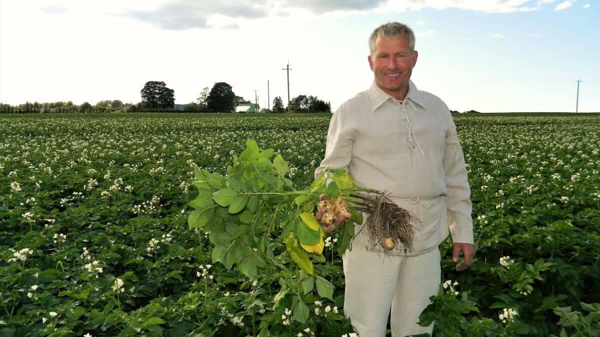 Eesti talu kartul