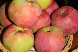 Eesti õun Katre