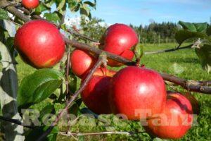 Õun Mõnu